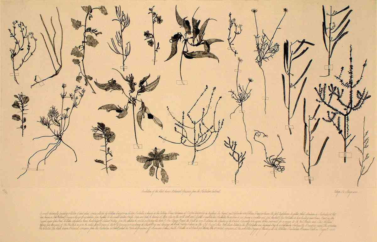 A selection of the oldest known botanical specimens from the Australian continent_ etching, executed in 2000, edition of 20_plate 50x100cm