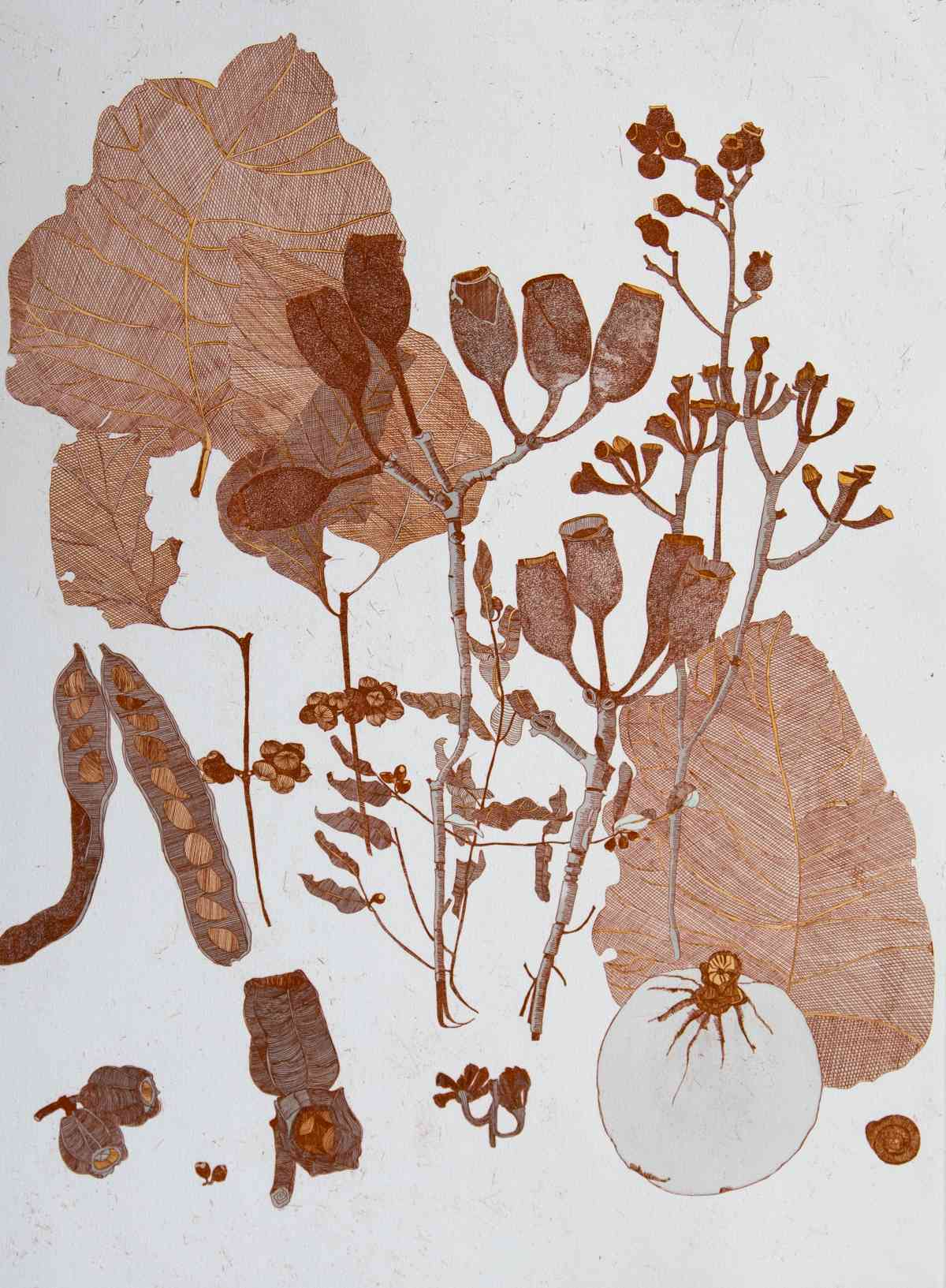 Collected specimens, Kimberley Region_etching, edition of 15_60 x 45cm