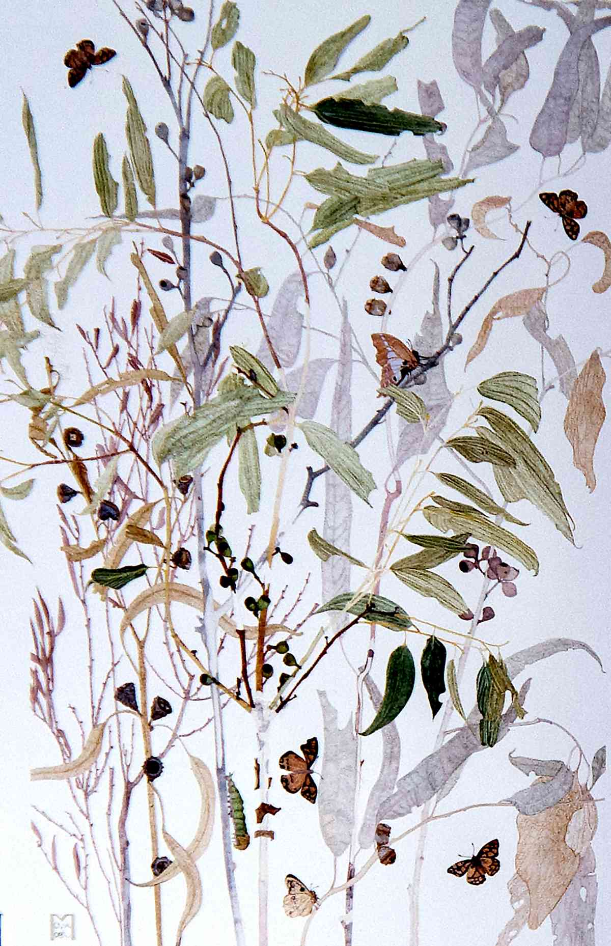 Eucalypt with butterflies, from Artistic Reflections on the Tree_watercolour_102 x 75mm