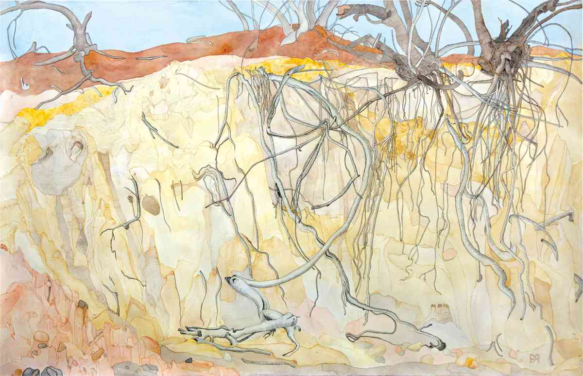 Exposed Mallee Roots In Eroded Creek, watercolour with some ink, 85 X 225cm