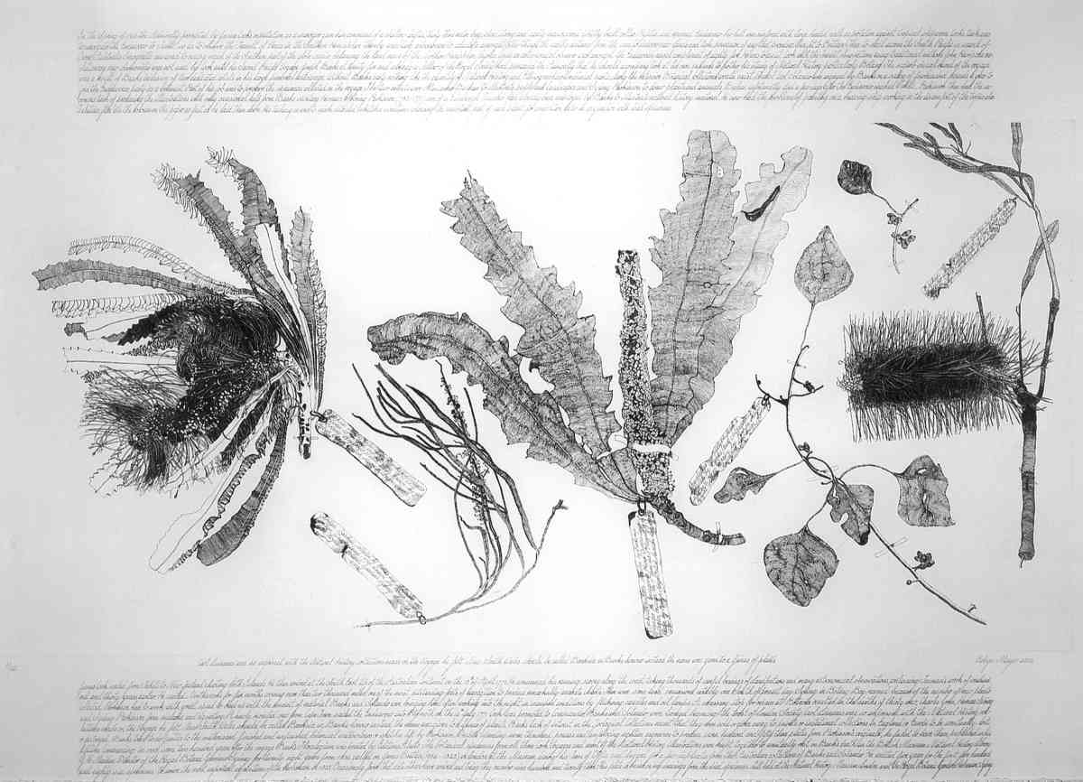 Specimens collected by Banks & Solander on Cook's first voyage, 1770_ etching executed in 2002, edition of 20_plate 50 x 100cm