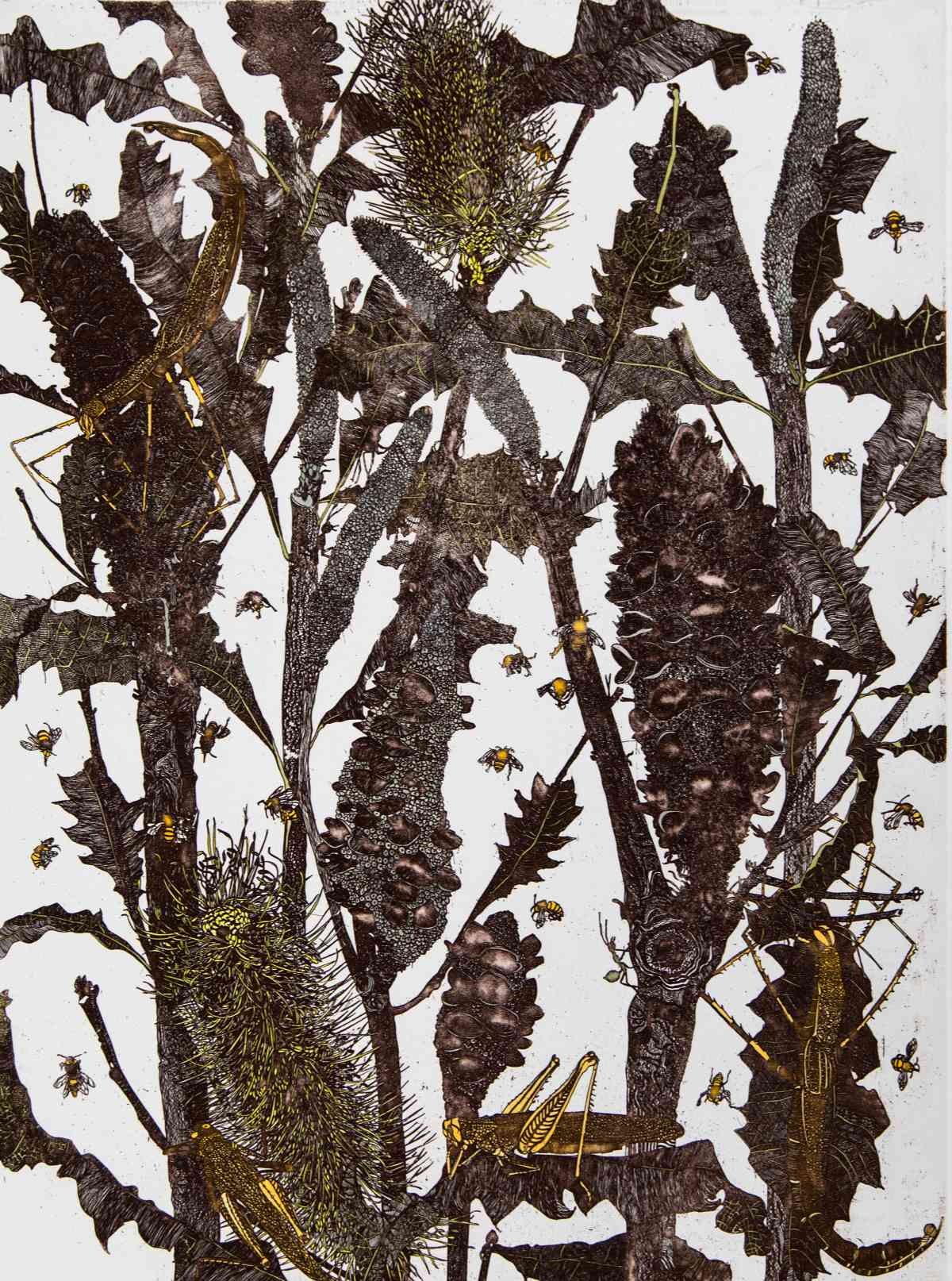 Tropical Banksia with Insects_etching, edition of 40_60 x 45cm