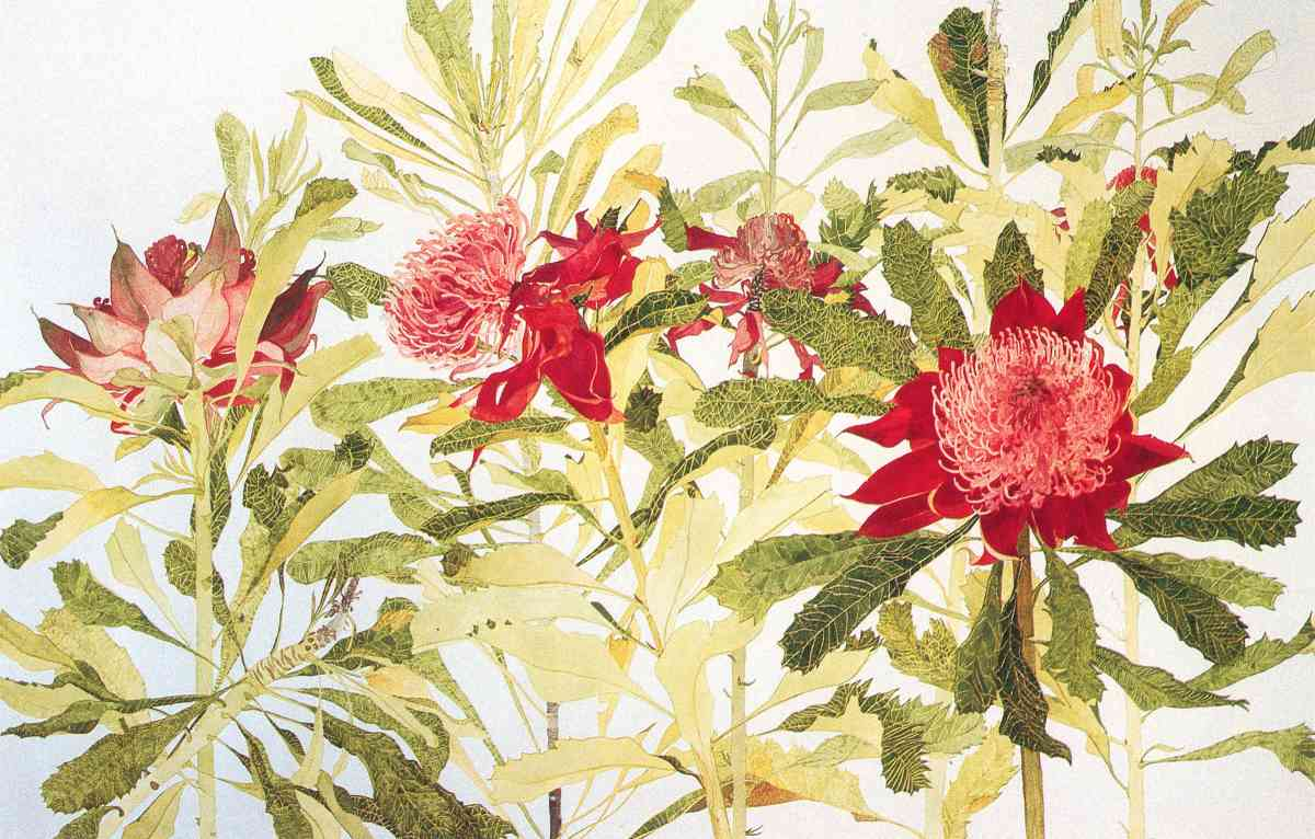 Waratah, Artistic Reflections on the Tree_water colour_102x75cm